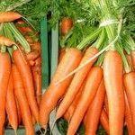 Zanahoria – Infinitas propiedades positivas