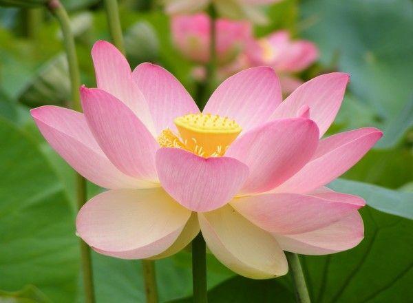 Flores de Bach – Su aplicación