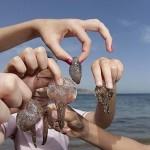 Picadura de Medusas – Todos los veranos lo mismo