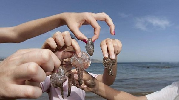 Picadura de Medusa – Todos los veranos lo mismo