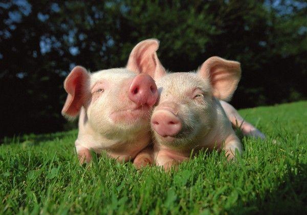 El Veganismo y las posibles carencias nutricionales
