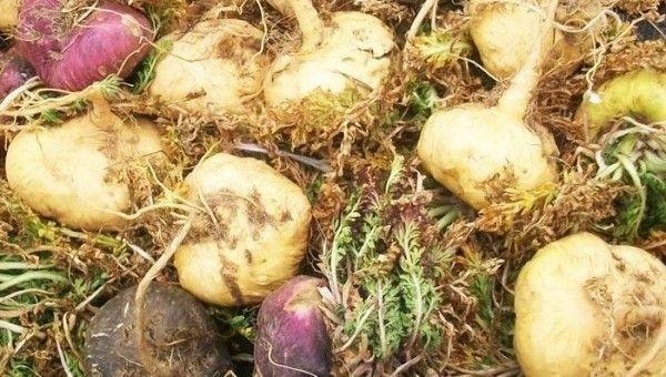 La maca peruana y el guaraná: alimentos que aumentan el deseo sexual