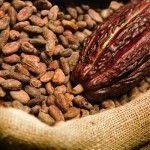 Chocolate – Proceso del cacao