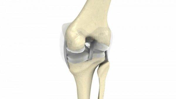 Tejido cartilaginoso – Almohadillas entre los huesos