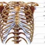 Tejido óseo