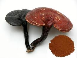 Ganoderma lucidum o reish