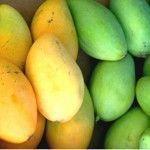 Mango africano – Terapia contra el sobrepeso