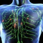 Los emuntorios. Sistema linfático