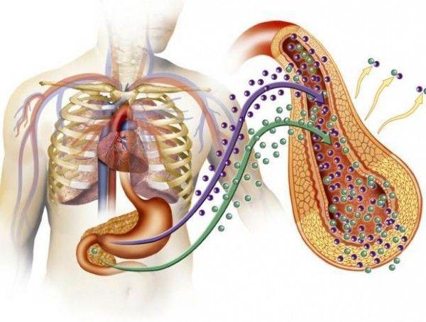 Flora intestinal – Bacterias 'buenas' para la salud