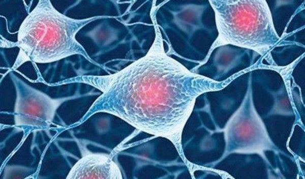 "Células madre adultas –""La madre de todas las células"""