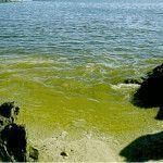 Fitoplancton marino – Leche materna de la tierra