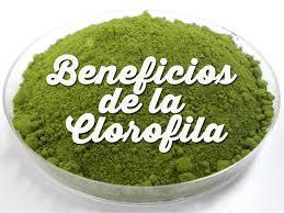 la clorofila
