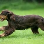 Las mascotas tratadas con liberadores de células madre