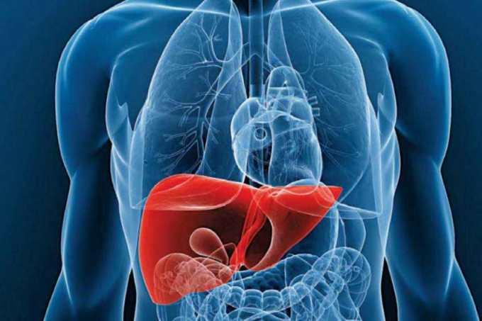 Hígado graso oesteatosis hepática ¿Qué es realmente?