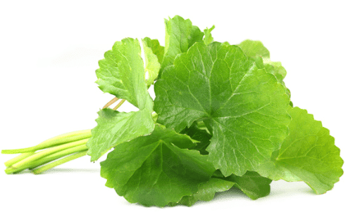 "Centella asiática – La planta ""multiusos"""