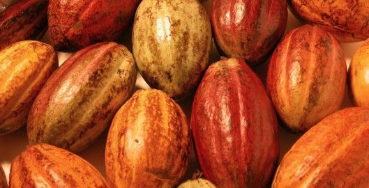 Tipos de cacao que hay