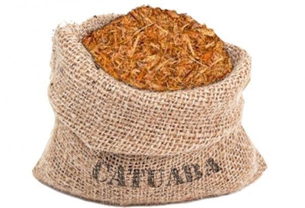Catuaba – Un árbol medicinal del Brasil