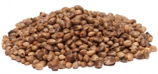 Proteína de cáñamo – La mejor proteína vegana