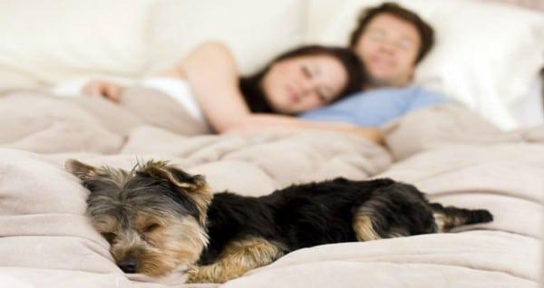 Dormir con perros o gatos mejora la calidad del sueño