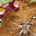 Garra del diablo – Un poderoso sustituto natural de los AINE