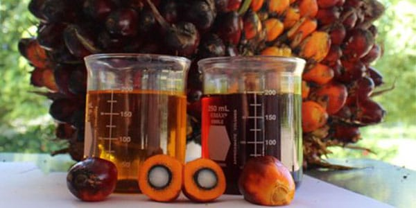 El aceite de palma y la actual polémica sobre sus efectos negativos en la salud