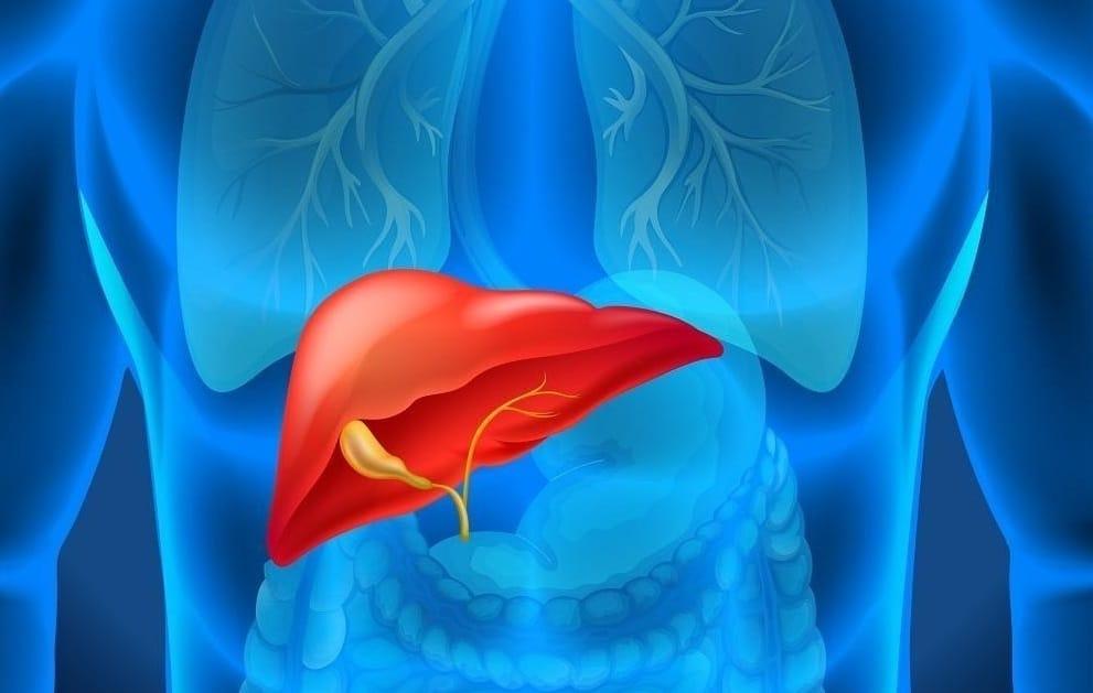 La vesícula biliar y el hígado