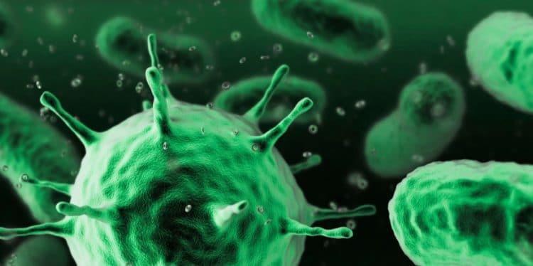 Las bacterias y los virus
