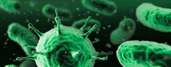 Diferencias entre las bacterias y los virus
